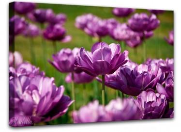 Schilderij Paarse tulpen 85x113