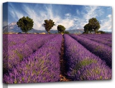 Schilderij Lavender 60x80 - ACTIE