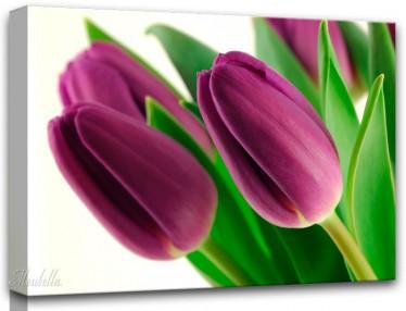 Schilderij Violet Tulip 1 - ACTIE