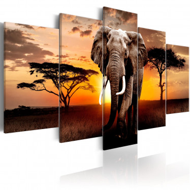 Schilderij Elephant Migration - 100x50 cm