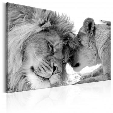 Schilderij Lion's Love - 60x40 cm