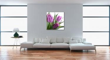 Schilderij Violet Tulip 80x80 - ACTIE